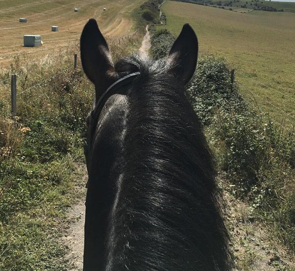 Hacks at Happy Valley Equestrian Centre